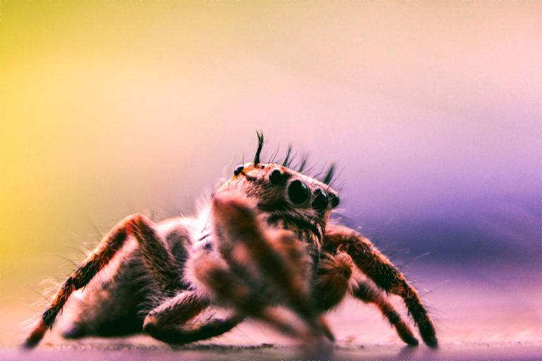 Piqûre d'araignée